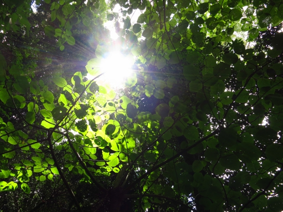 Dappled light at Dorrigo